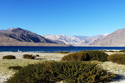 Nature morte au Ladakh