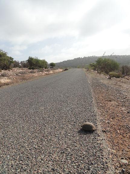 Passage prioritaire, Sidi Kaouki, Maroc
