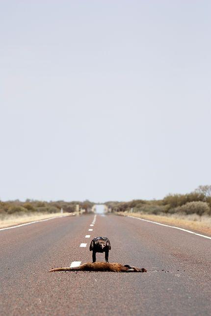 Pas perdu pour tout le monde, Uluru