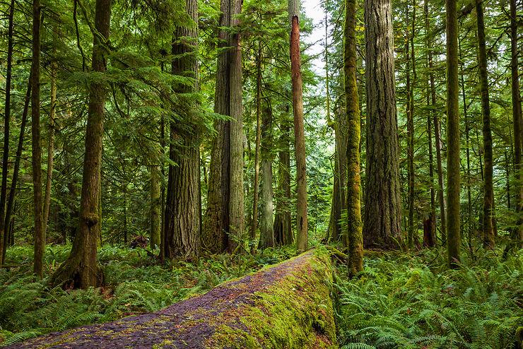 Parc régional Mc Millan : des forêts pour cathédrales