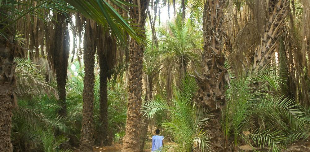 Les Oasis de Tergit et Toungad