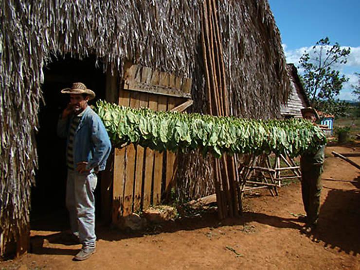 Vuelta Abajo : la terre du meilleur tabac du monde