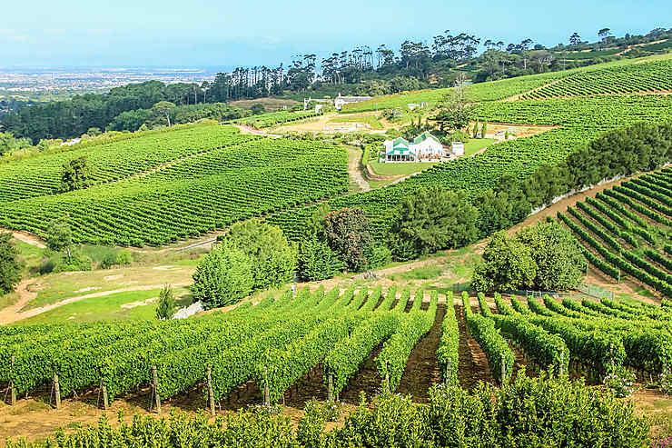 Vins du Cap : les plus beaux vignobles d'Afrique du Sud