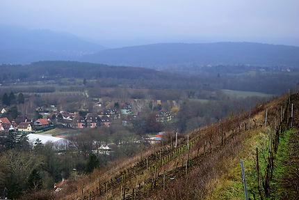Le vignoble d'Obernai, Alsace