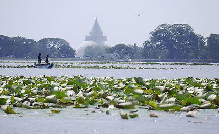 Pêcheur, lac de lotus, au Sri Lanka