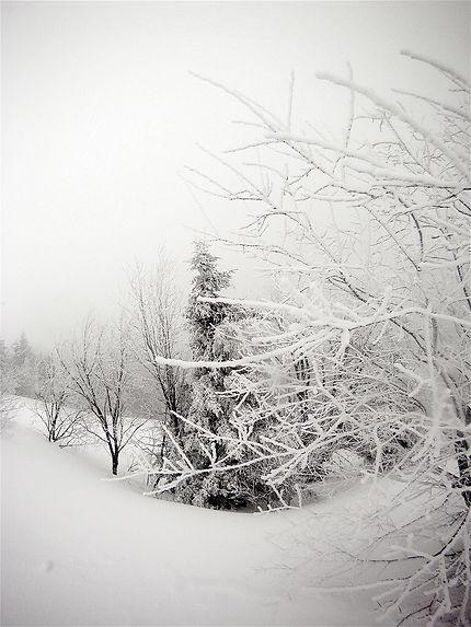 Arbre enneigé, Le Lioran en Auvergne