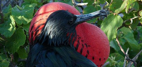 3 semaines Galapagos/Nord Pérou