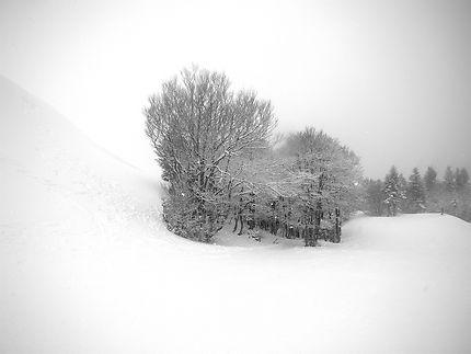 Bosquets d'arbres entre 2 pistes, Le Lioran