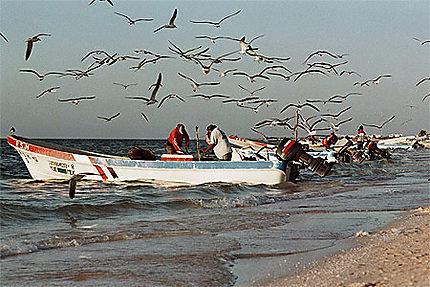 Pescadores en Celestùn