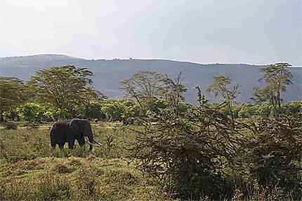 Eléphant en forêt