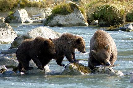 Repas de famille, ours à Haines