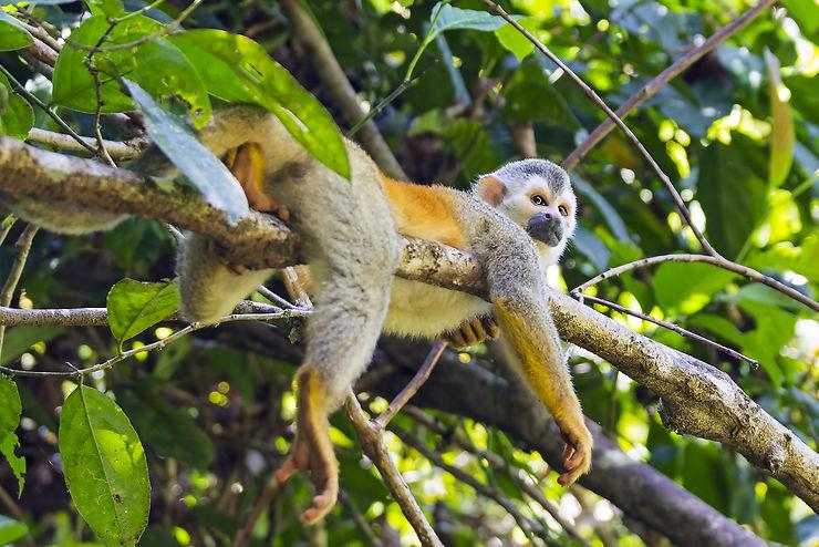 Nature - Le Costa Rica lance une campagne contre les selfies avec les animaux