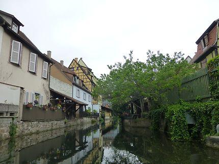Nature en pleine ville, petite Venise de Colmar