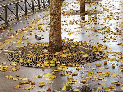Ambiance d'automne Boulevard Voltaire