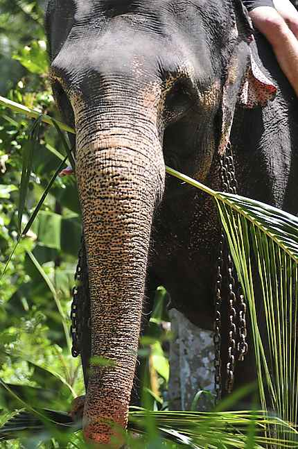 Millenium Elephant Fundation