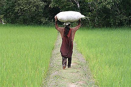 Paysanne en rizière