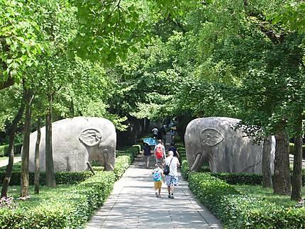 Eléphants de pierre, mausolée Xiaoling