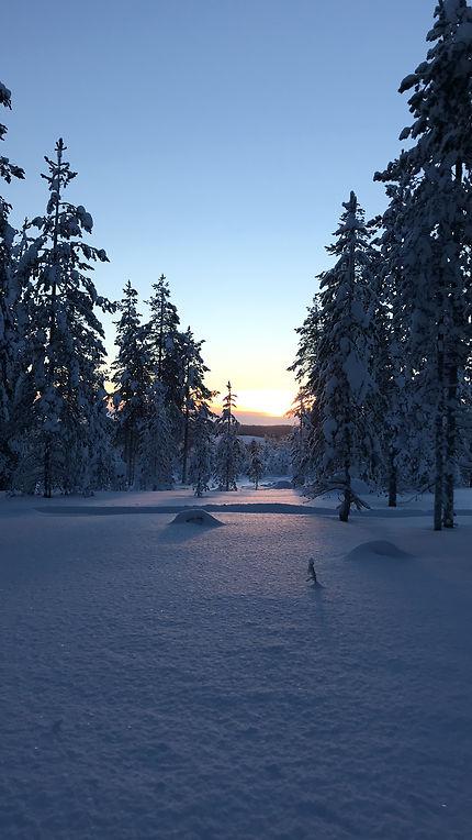 Sous-bois à Sonka, Laponie finlandaise