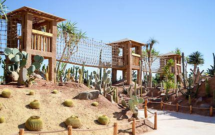 Le Jardin des Cactus, Crocoparc Agadir, Maroc : Plantes : Crocoparc : Agadir  : Côte atlantique : Maroc : Routard.com