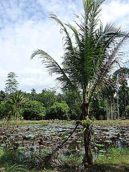 Krabi, sur la route du parc national de Khao Phanon Bencha