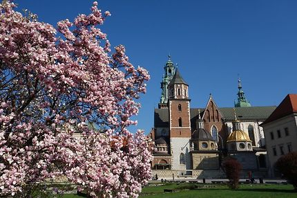 Cathédrale du Wawel au printemps