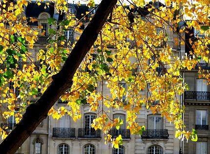 Image d'un automne Parisien