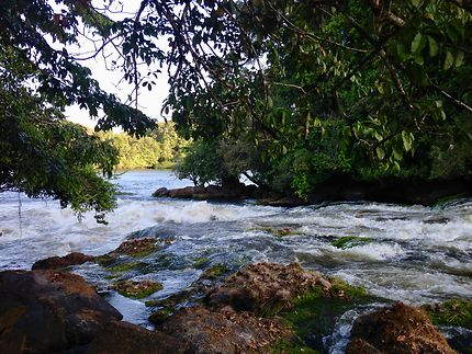 Un saut parmi tant d'autres dans le fleuve Oyapock