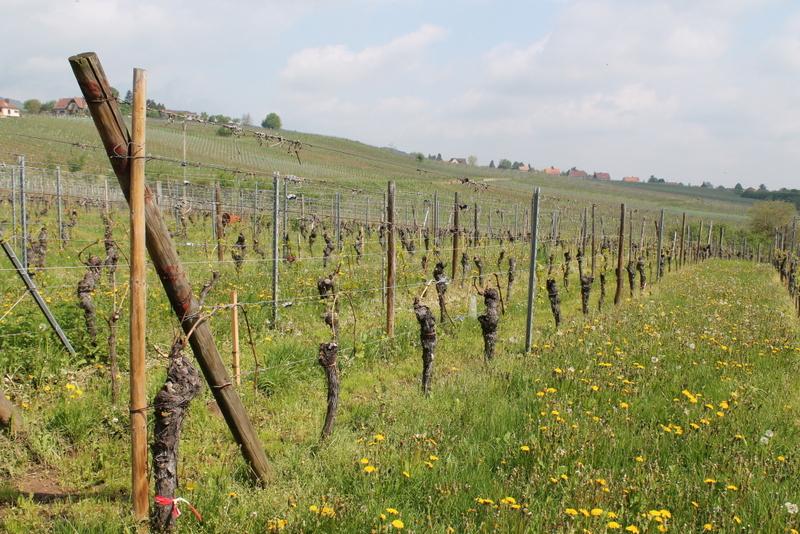 Route des Vins d'Alsace - Alsace