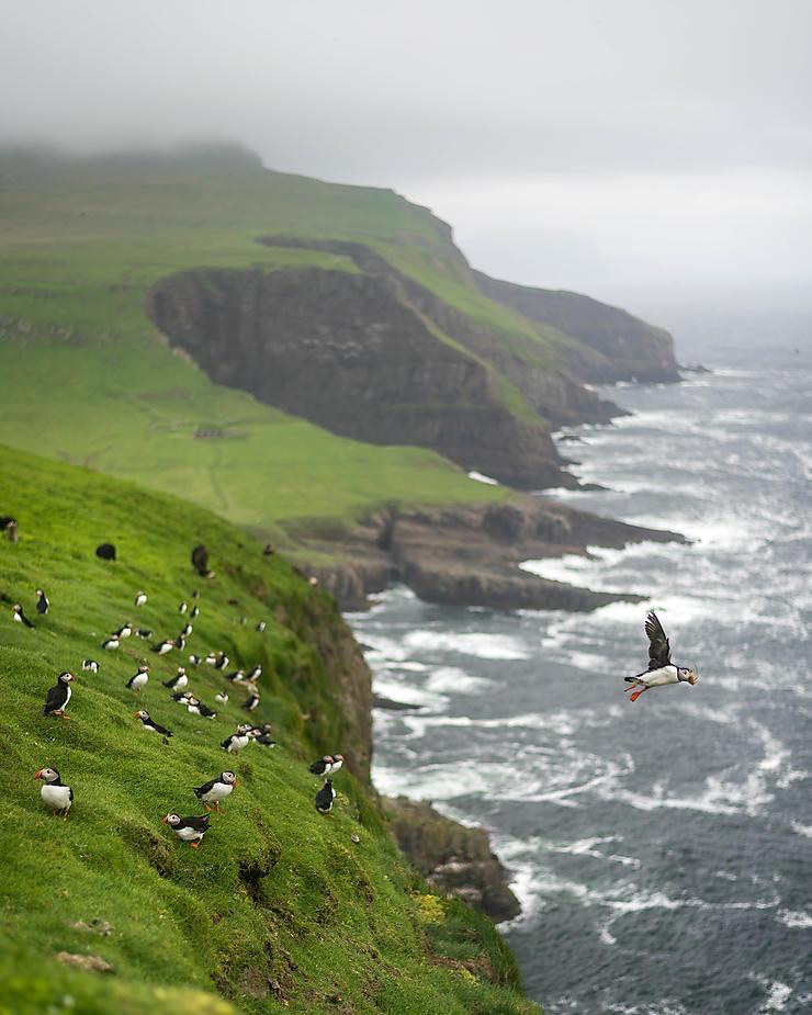 L'envol, Îles Féroé