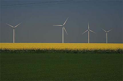 Culture d'éoliennes