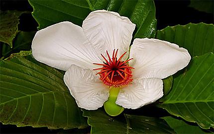 Fleur dans le jardin botanique