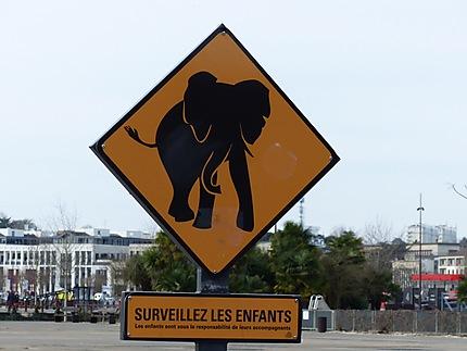 """""""Attention éléphant """"peut paraître surprenant"""