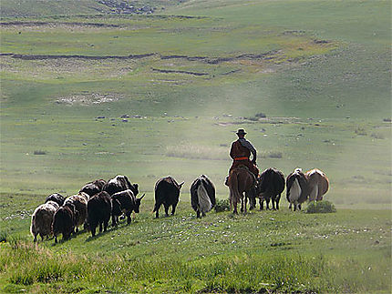 Scène pastorale dans la vallée de l'Orkhon
