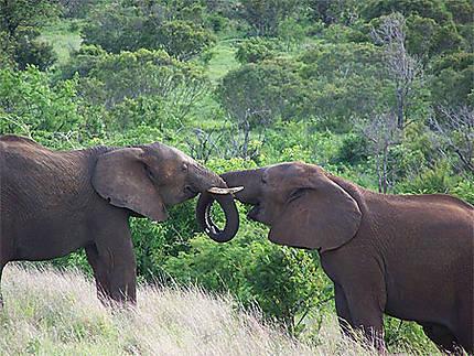 La grace des éléphants