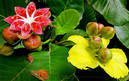 Fleurs dans le jardin botanique