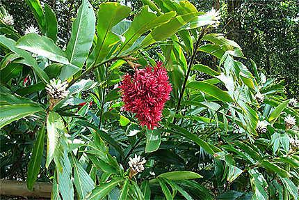 Fleurs Exotiques Fleurs Jardin Botanique De Deshaies Deshaies