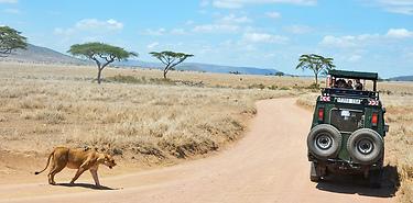 Les grands safaris de Tanzanie