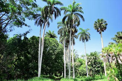 Promenade dans le jardin botanique de Cienfuegos