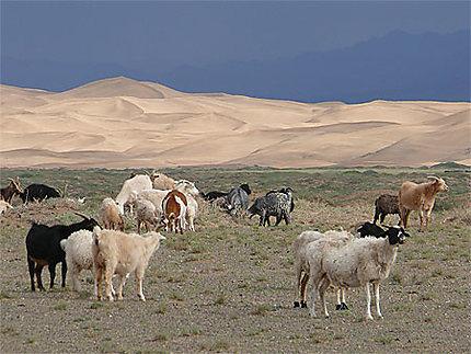 Les dunes chantantes
