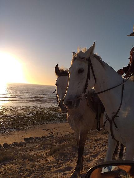Chevaux sur la plage à Aourir, Maroc