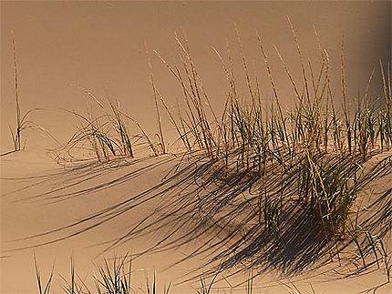 Lumière du matin sur les dunes chantantes