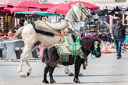 Cheval et poney sur la place Lahdim