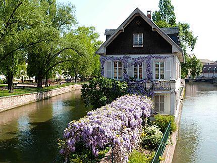 Petite France - La Maison aux glycines
