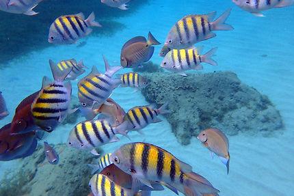 Snorkeling aux Anses d'Arlets