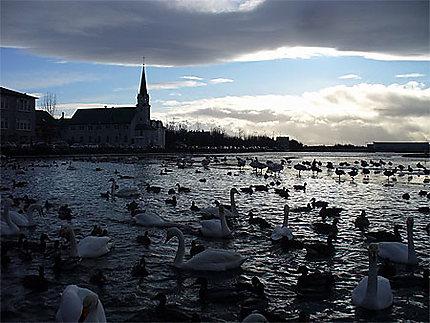 Clair obscur au lac Tjörnin