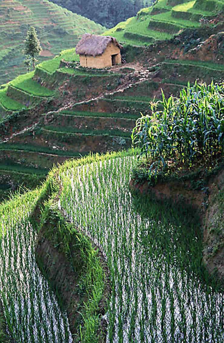 Yuanyang : les  plus belles rizières en terrasse du monde ?