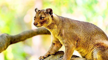 Parc national de Marojejy à Madagascar