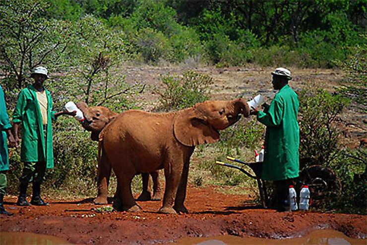 Karen, nursery pour éléphants