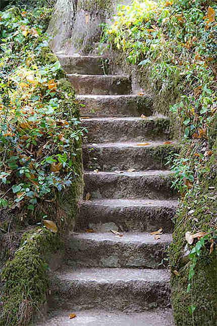 Sintra - Palais de la Regaleira - Escalier et nature