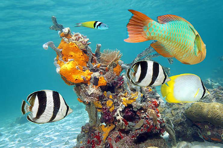 Plonger dans les eaux limpides de María la Gorda, à l'extrémité ouest de l'île